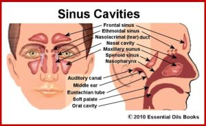 SinusCavities